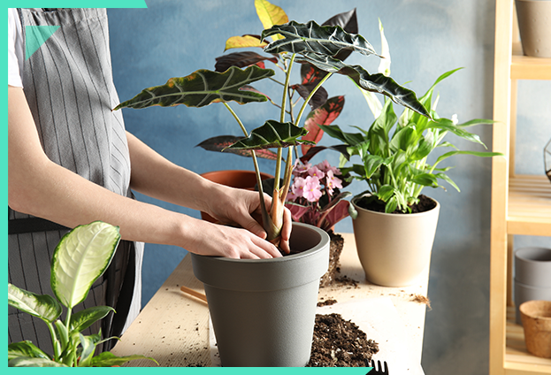 Bien choisir ses plantes